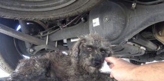 Perra no quería ser rescatada sin su cachorro