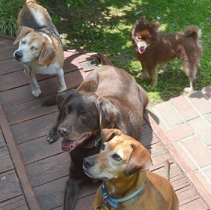 Perro ciego y sus hermanos rescatados