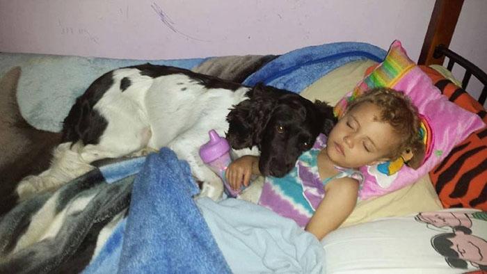 Perro cuida día y noche a niña epiléptica