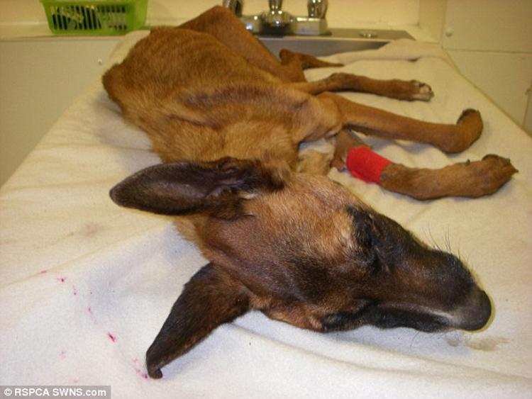 Perro en desnutricion extrema