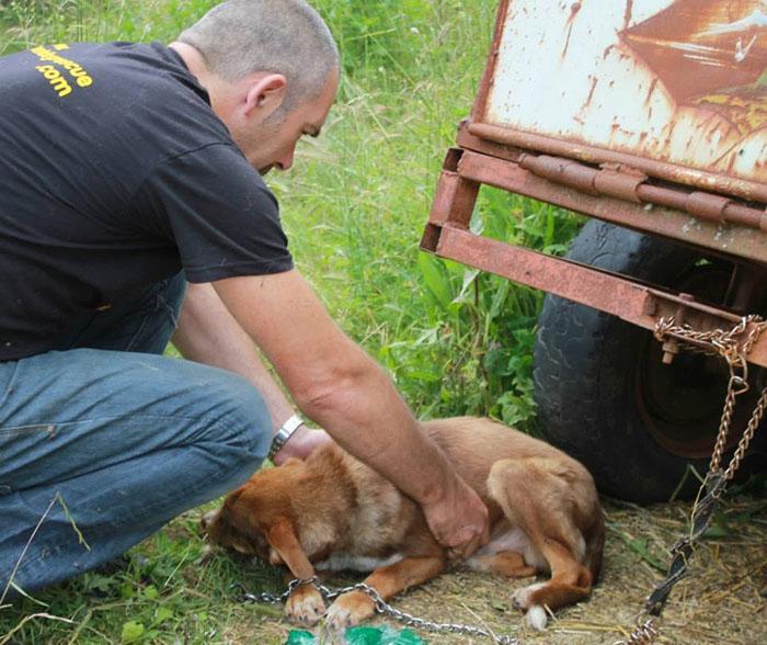 Perro encadenado fue rescatado