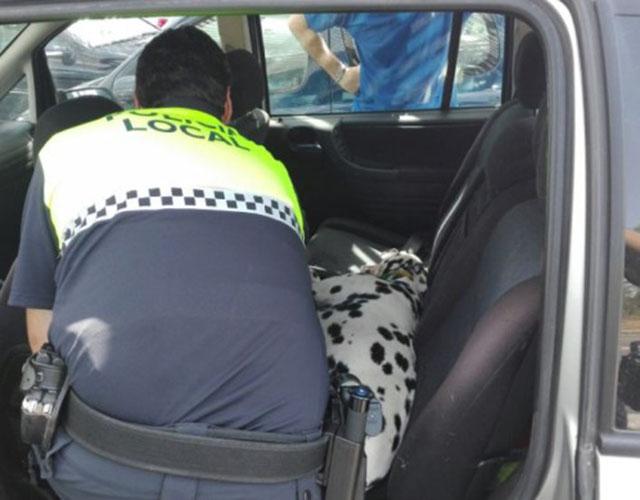 Perro encerrado en coche caliente