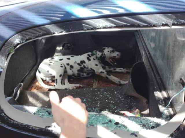 Perro encerrado en el maletero