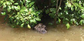 Perro había perdido las esperanzas y fue rescatado en el último momento