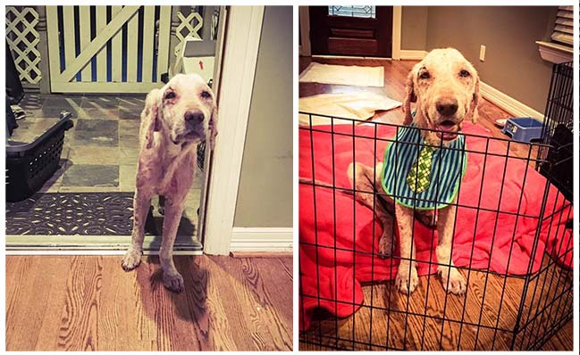 Perro había sido tratado tan mal que tenía miedo de ir a un nuevo hogar