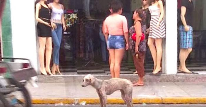 Perro hambriento era ignorado en las calles de Perú