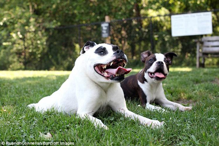 Perro jorobado y su hermano