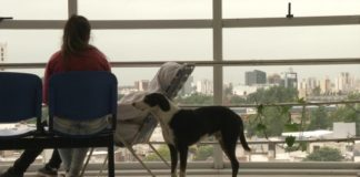 Perro murió esperando a su humano que falleció en un hospital