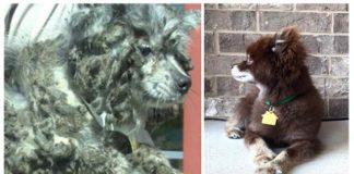Perro pasó toda su vida encerrado en un gallinero