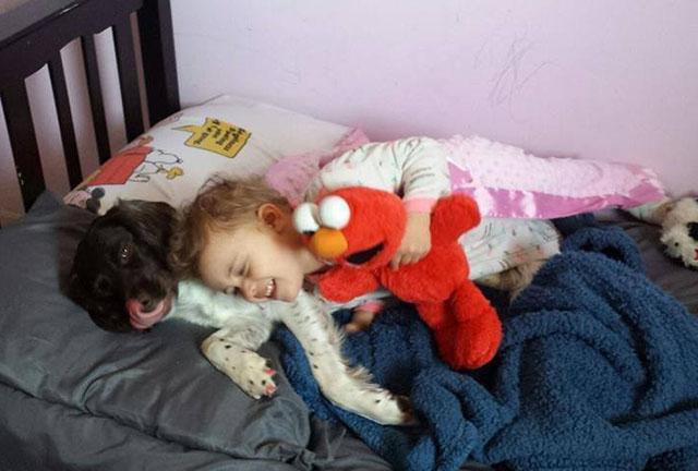 Perro que nadie quería salva a diario a niña con epilepsia