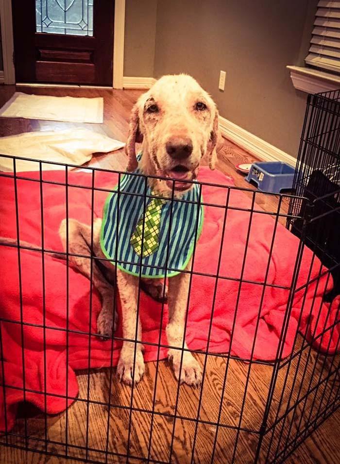 Perro rescatado con muchas enfermedades