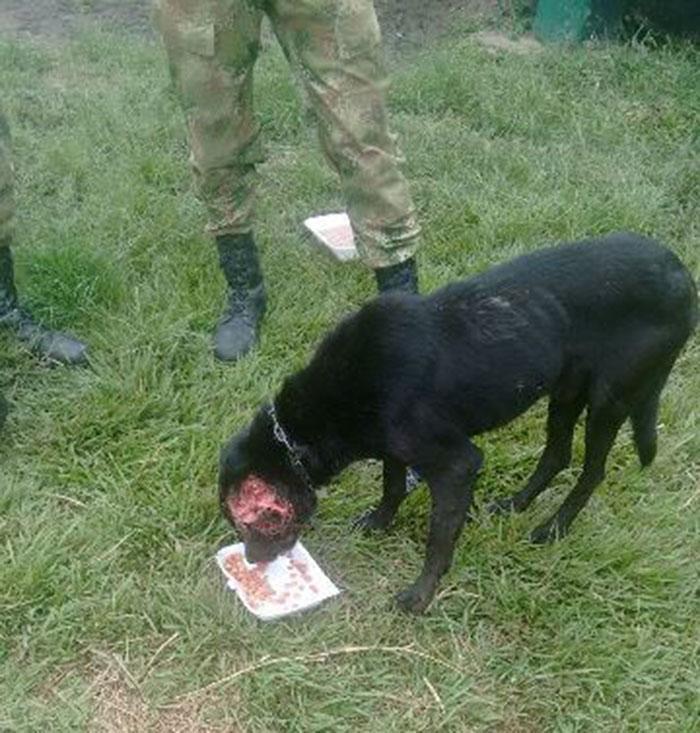 Perro rescatado en Huila Colombia