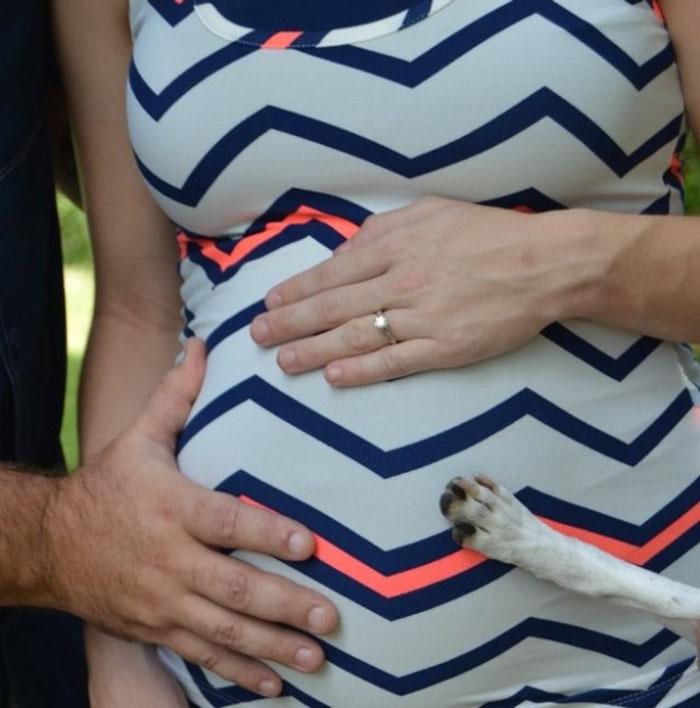 Perro sale en sesión de fotos de maternidad
