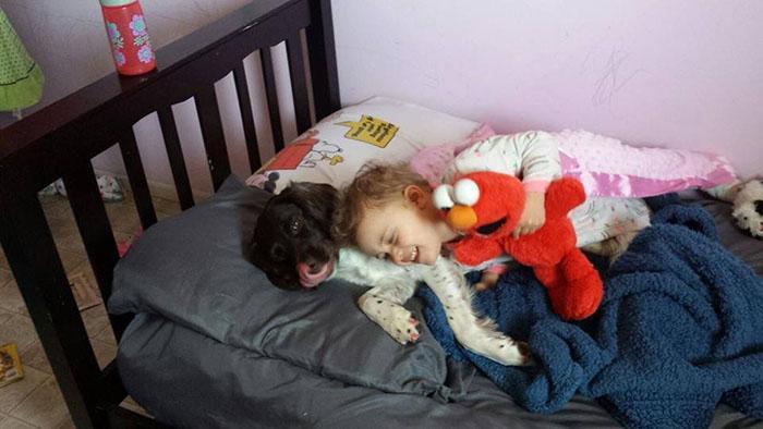 Perro salva a diario a niña epiléptica