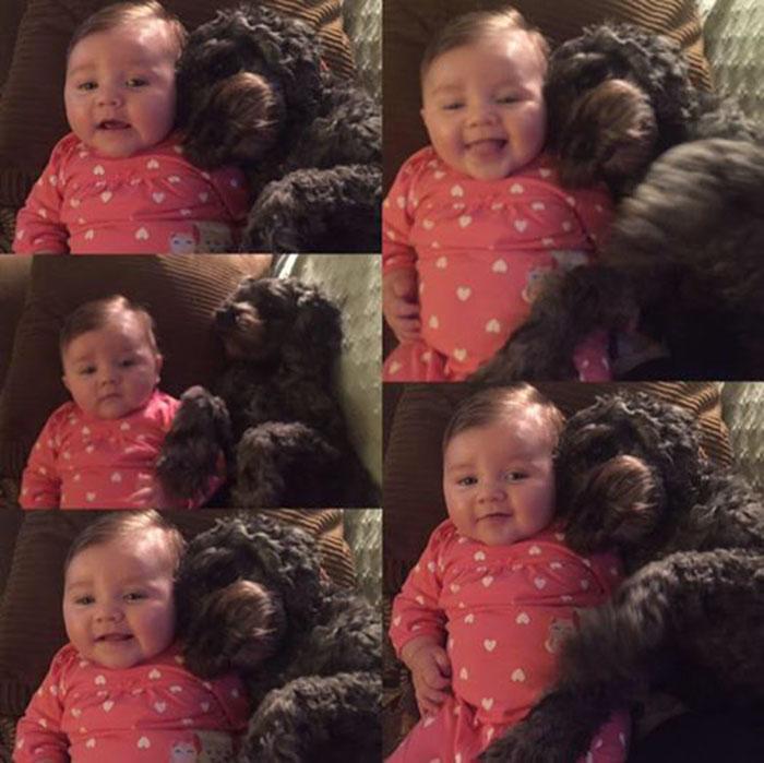 Perro salva a una bebé