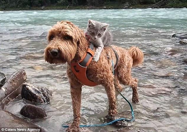 Perro y gatito buenos amigos