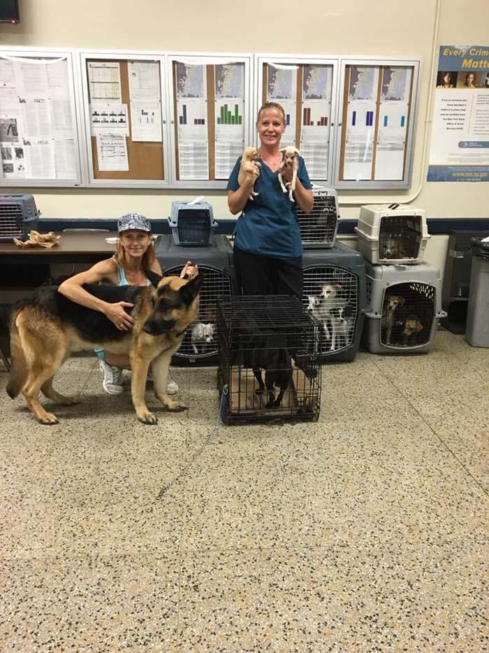 Perros rescatados por la policía