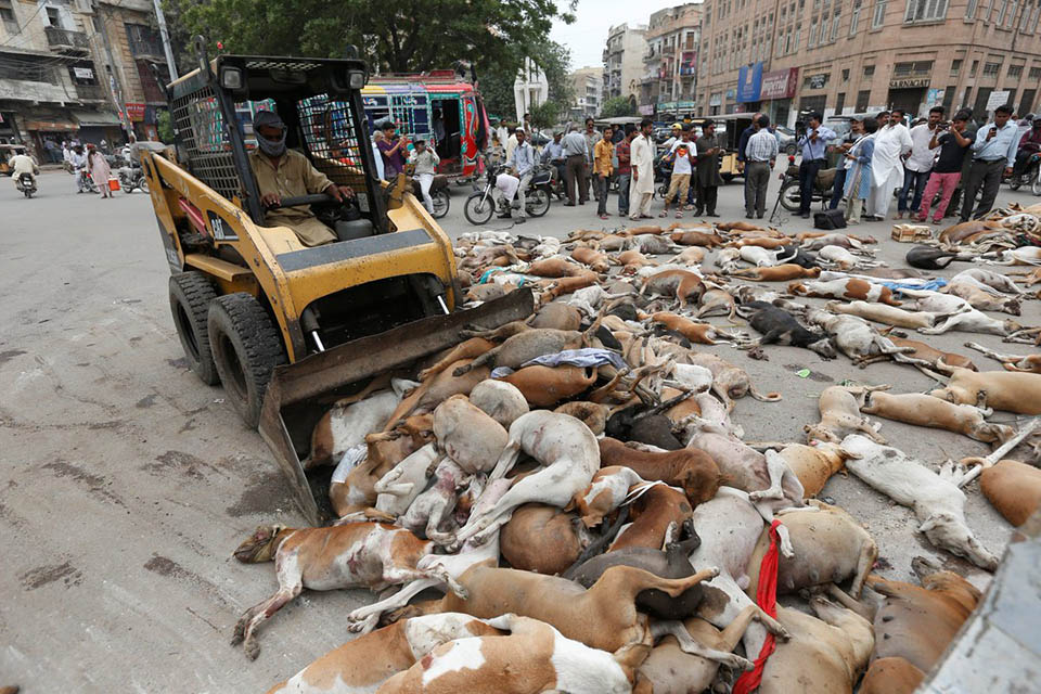 Perros sacrificados
