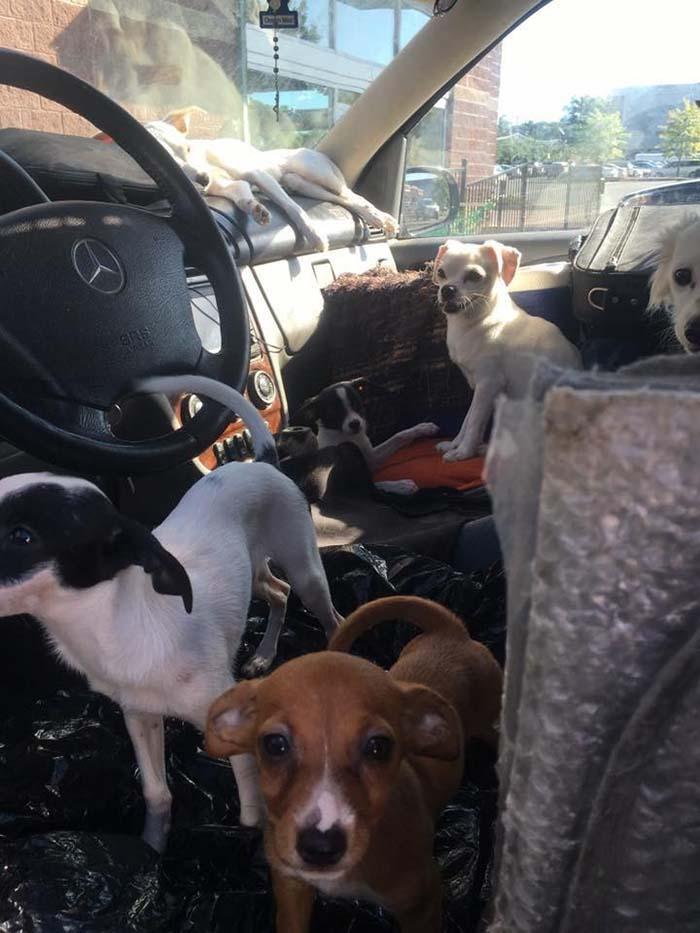 Perros viviendo en un auto caliente
