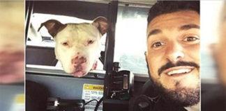 Policía ayuda a mascotas perdidas a encontrar su camino a casa