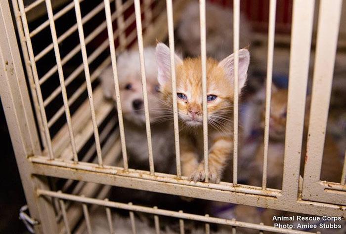 Rescatados de una fábrica de cachorros