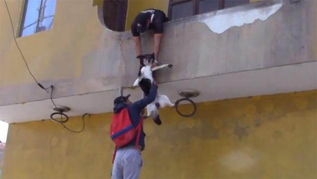 Rescatan a un perro que estuvo abandonado dos meses en un balcón