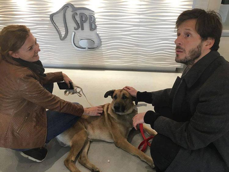 Rubio en el veterinario