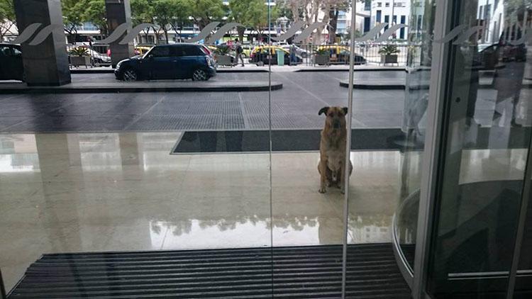 Rubio espera a Olivia en el Hotel