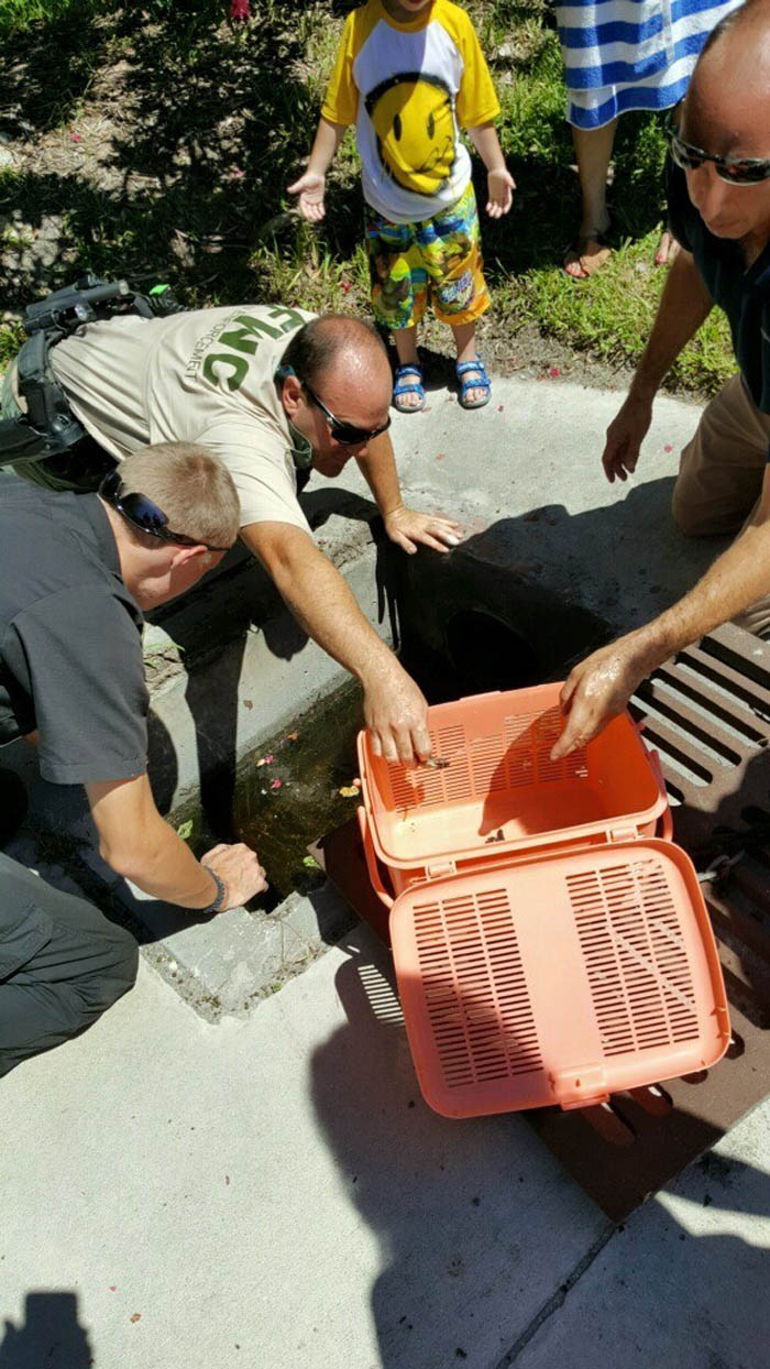 Salvan tortugas marinas