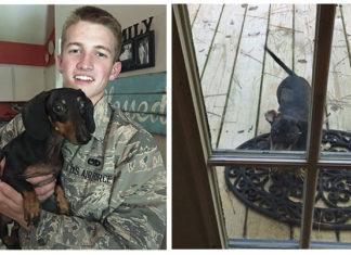 Soldado se reencuentra con su perro después de seis meses