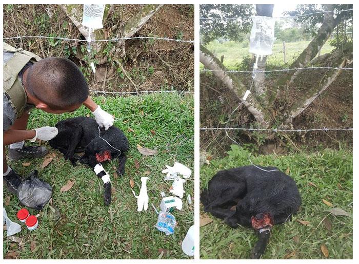 Soldados Colombianos salvaron a un perro