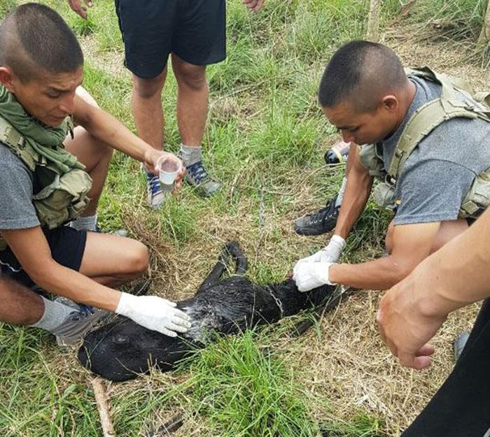Soldados curaron y salvaron a un perro