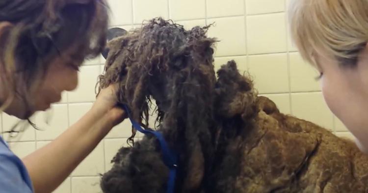 Transformación de poodle