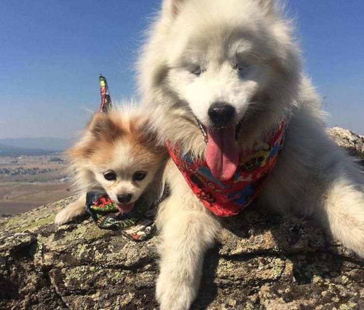 Zen y Hoshi amigos perrunos