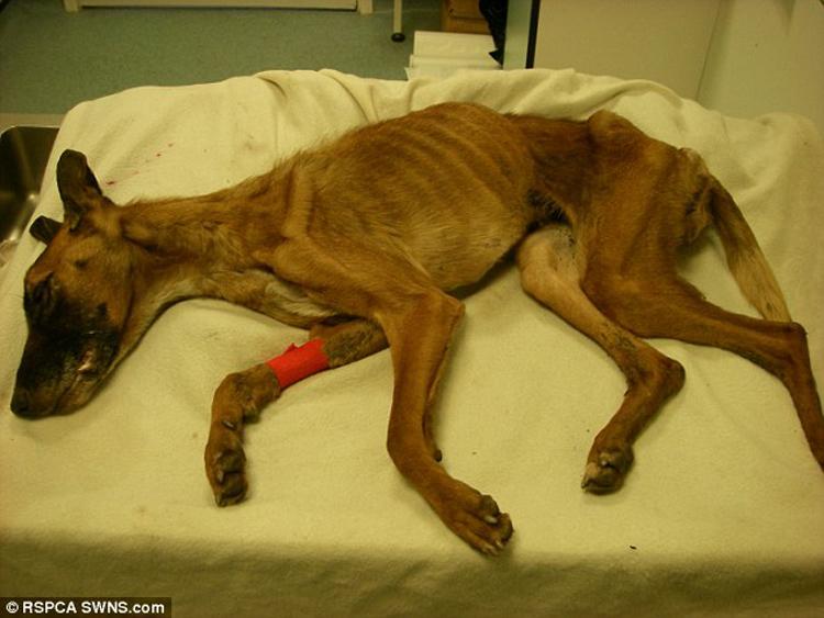 perro en estado de desnutrición