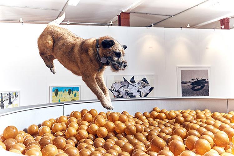 perro en recipiente de croquetas