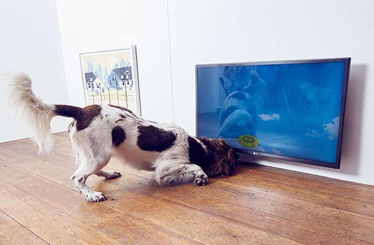 simulador de frisby para perros