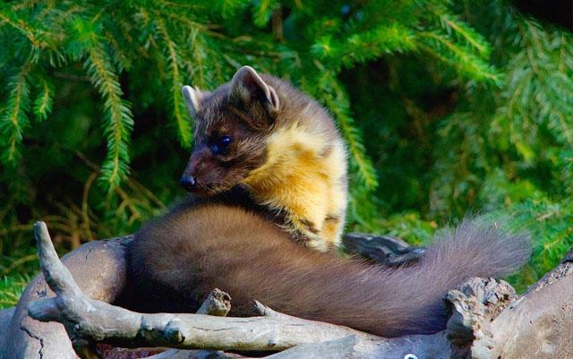Animales Omnívoros- Curiosidades, características y ejemplos