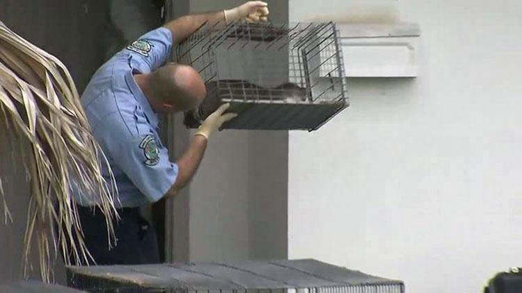 Animales en horrobles condiciones fueron rescatados