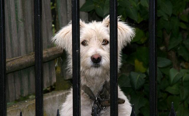 Aprueban registro que no permitirá a lo abusadores de animales adoptar mascotas