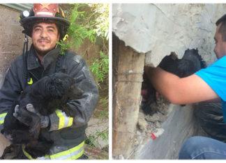 Bomberos rescatan a un perro atrapado en medio de dos paredes