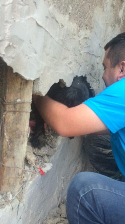Bomberos rescatan perro