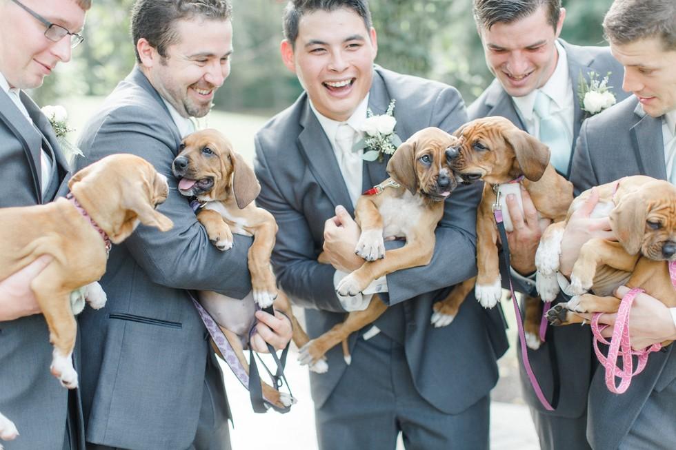 Cachorros en una boda