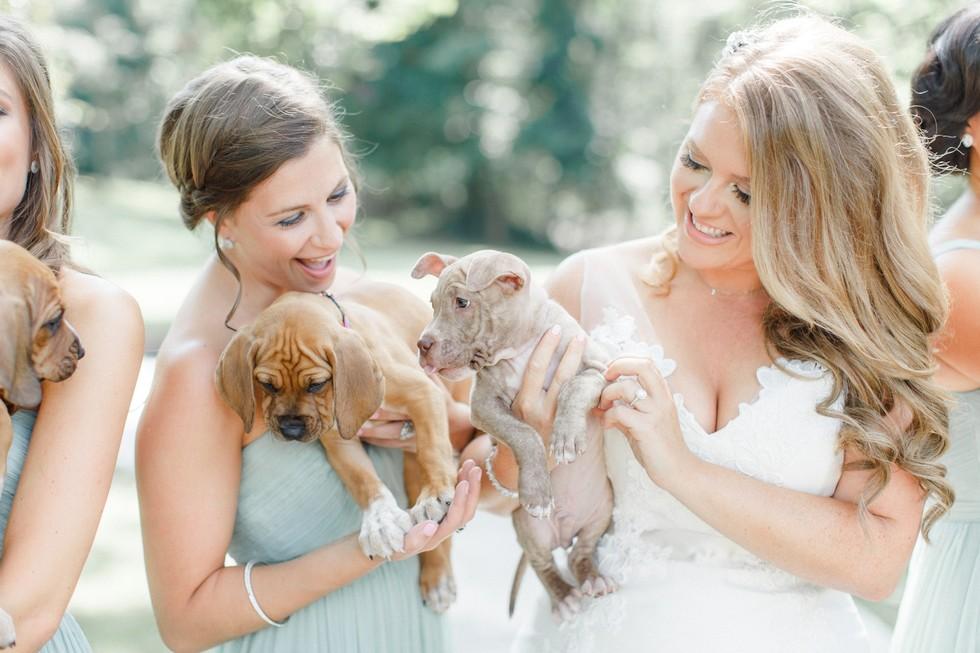 Cachorros rescatados en una boda