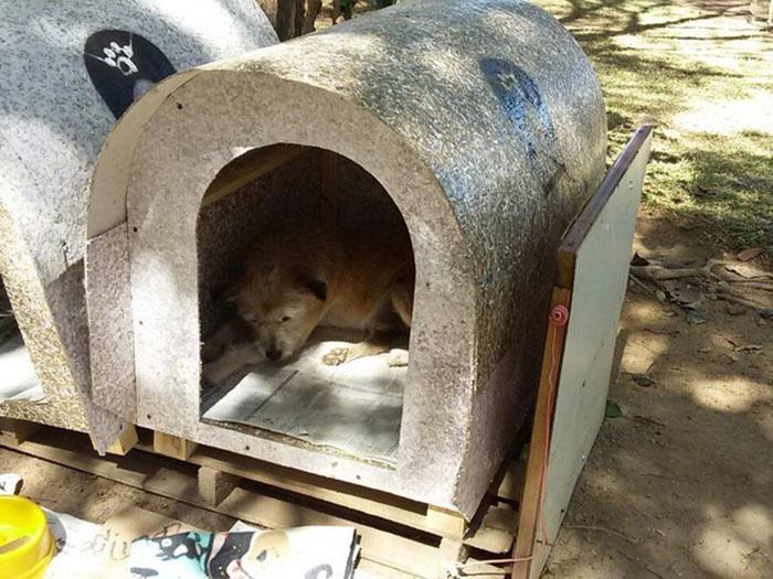 Casas para perros abandonados