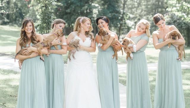 Damas de honor llevan cachorros rescatados en lugar de flores