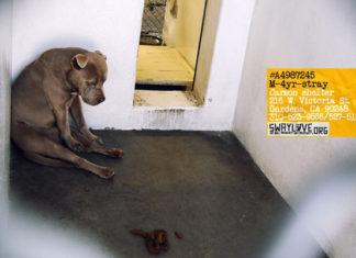 El rostro de este perro refleja su ausencia de esperanza ante la vida