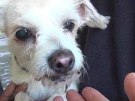 """Esta perra de 15 años de edad, fue abandonada en un refugio porque sus humanos se encuentran """"muy ocupados"""""""
