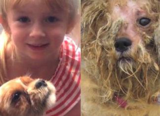 Esta perra había perdido la fe en los humanos hasta que una adorable niña apareció en su vida