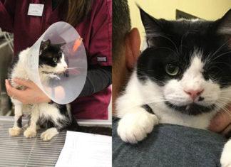Este gato fue atropellado por un auto, todos lo creían muerto, pero escapó de su tumba en busca de una nueva oportunidad